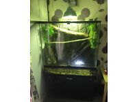 Bargain !! Chinese Water Dragons And Full Set Up For Sale At A Bargain Price