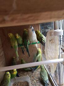 3 new unused cage, Beautiful Budgies