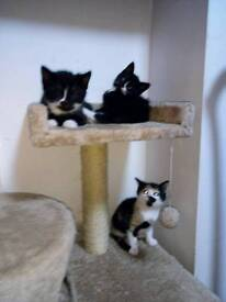 4 beautiful kittens are looking for a new home