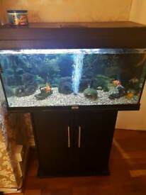 110 Litre Fish Tank & Goldfish