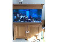 Marine fish tank, oak cabinet 350ltrs