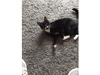 2 adult cats boy and girl free to good home