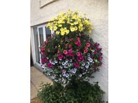 Excellent quality hanging baskets