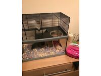 Gerbil and home for sale.