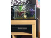 Fish tank plus 2 fish and accessories with cleaning kit