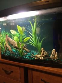 90ltr aquarium for sale