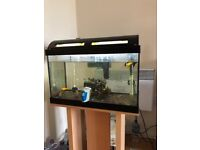 Aquarium 40 litre with 8 tropical fish