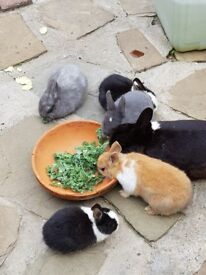 TEXT MESSAGES WON'T BE REPLIED rabbits for sale in west london in greenford ub6 area £6.00 each