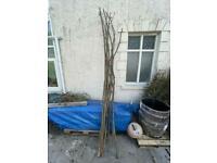 Coppiced Hazel sticks for posts/fencing