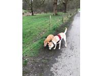 Dog Walking & Doggy Daycare