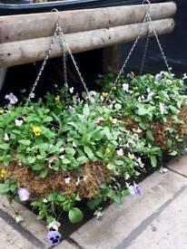 """12"""" Winter Hanging Pots"""