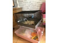 Cute Syrain Hamsters & Cage