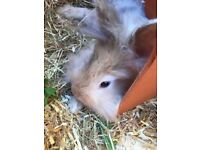 Rabbit with hutch