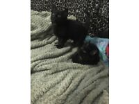 2 black kittens and