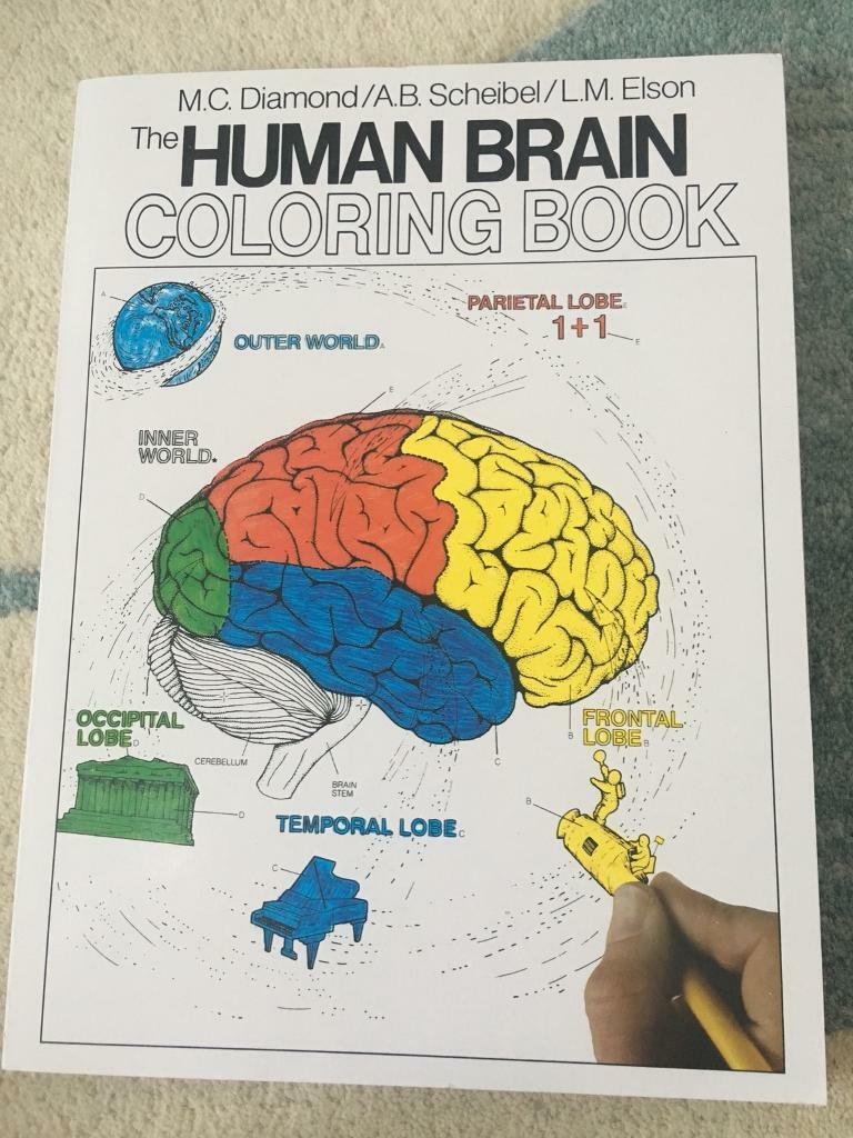 Human Brain Colouring Book For Medical Students Neuroanatomy In
