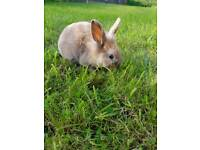 Baby rabbits for sale.