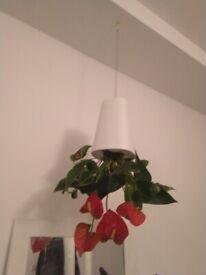 Four hanging upside down plant pots with plants central London bargain