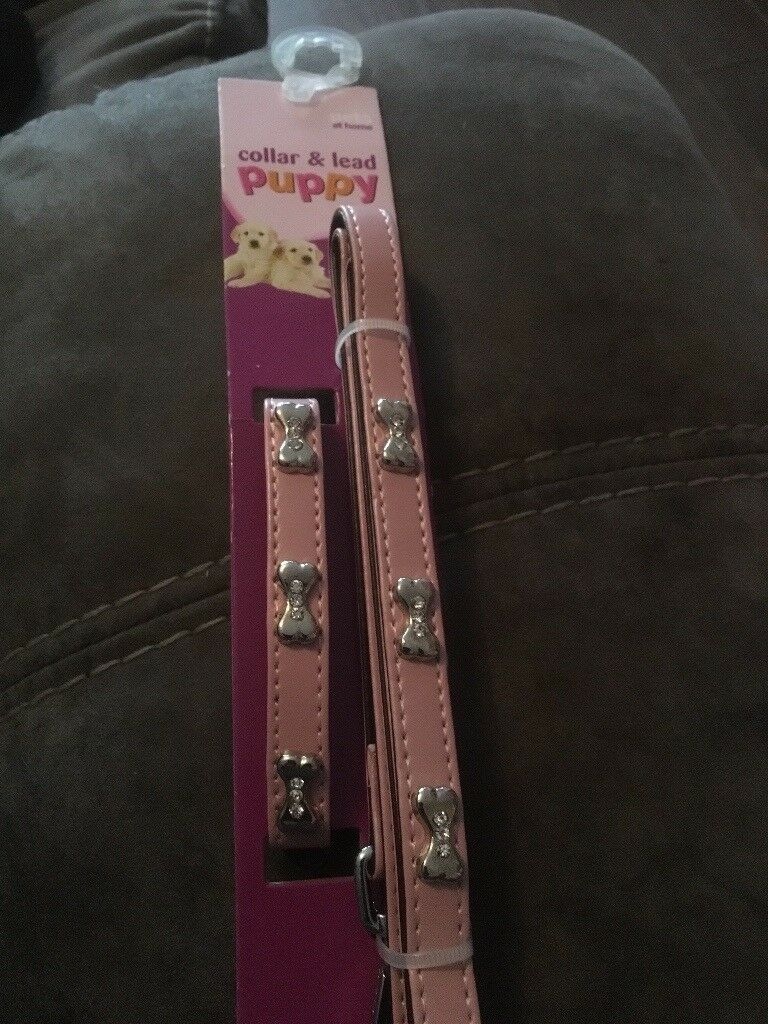 Puppy collar and lead sets