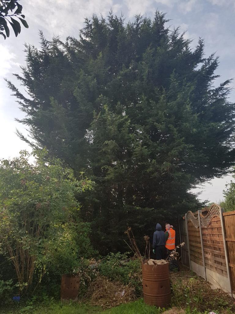 Pete S Garden Services Tree Surgeon In Dartford Kent Gumtree