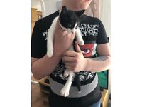 2 beautiful female kittens for sale