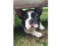 CUB's Pet care, Walks/Feeds/Grooming/Companionship