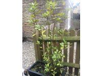 shrub and plant pot
