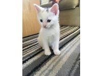 Stunning rare kittens