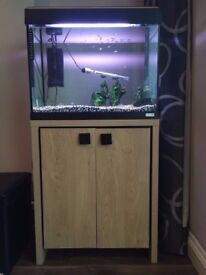 2ft fishtank with cupboard and 30-40 fish