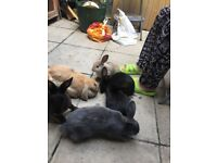 10 WEEKS OLD RABBITS