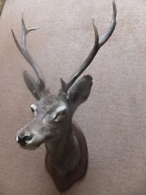 Antique Taxidermy – Magnificent Stags Head