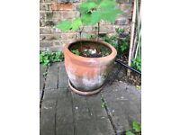2 x Flower Pots