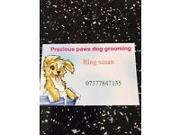 Dog grooming new salon