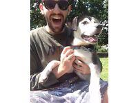 Friendly Dog Walkers in West London
