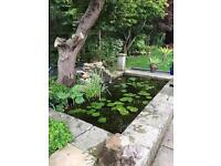 Pond cleaning services and maintenance