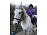 Pony for free!