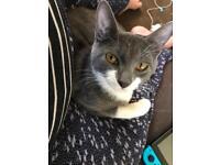 Kitten/cat