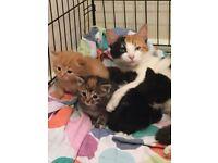 Beatiful kittens for sale