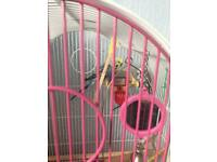 x3 budgies with cage