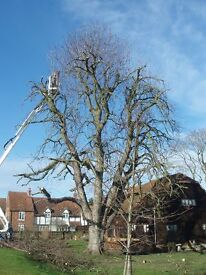 Tree Surgery & Maintenance Company requires a F/T Person, Undertaking Tree, Hedges and Mowing Works