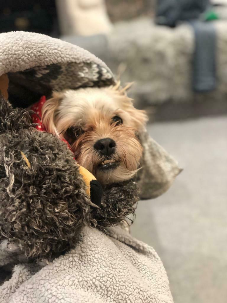 Dog For Re Home In Eastbourne East Sussex Gumtree