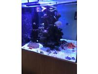 marine fishtank 3ft Cubed