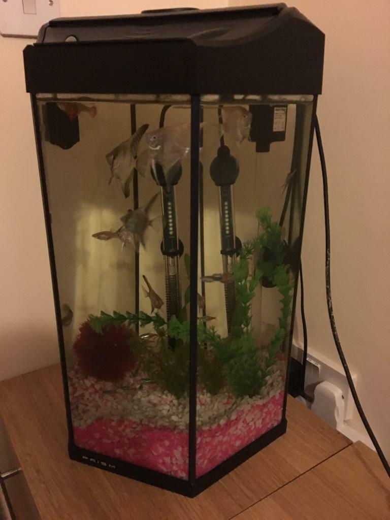 Small aquarium hexagon shape full set up as you can see in the picture