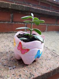 Jade Plant - Crassula Ovata Mini