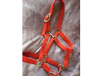 Red horse head collar