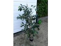 Artificial Plant. Approx just under 5 ft tall.