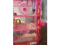 2 roborovski hamsters with cage