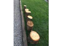 Rings of wood