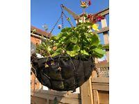 2 x black hanging baskets