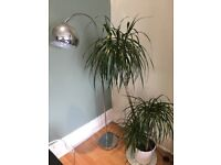 FOR SALE: Lamp and plant