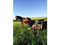 Pony Trap Cart Carriage Horse